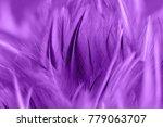 purple chicken feathers in soft ... | Shutterstock . vector #779063707