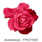 flower pink rose  on a white... | Shutterstock . vector #779177653