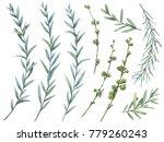 floral set. botanical... | Shutterstock . vector #779260243