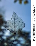 Small photo of Skeleton of a last year's leaf