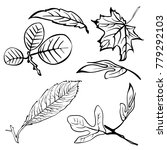 leaf collection   vector... | Shutterstock .eps vector #779292103
