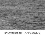 seagulls at sea black and white | Shutterstock . vector #779360377