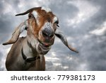 funny brown goat shows his... | Shutterstock . vector #779381173