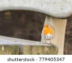 european robin  erithacus... | Shutterstock . vector #779405347