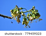 a unique floral on high tree.... | Shutterstock . vector #779459323
