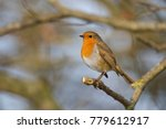 robin on a branch | Shutterstock . vector #779612917