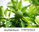 close up of green limes on the... | Shutterstock . vector #779757013