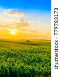 beautiful morning sunrise over... | Shutterstock . vector #779783173