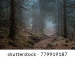 mysterious path. mysterious... | Shutterstock . vector #779919187