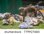 Small photo of KANDY, SRI LANKA - JULY 19, 2016: Macaque eats food from a trash pile.