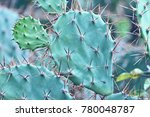 Small photo of Cacti Keen Needles Green Concept