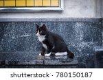 Black And White Cat Sitting...