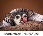 cute apple head chihuahua on a... | Shutterstock . vector #780264223
