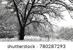 tree covered with snow in... | Shutterstock . vector #780287293