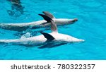 dolphins swimming in the clear... | Shutterstock . vector #780322357