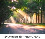 sunlight through trees | Shutterstock . vector #780407647