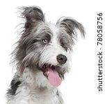 Close Up Of Mixed Breed Dog  7...