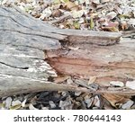 Small photo of decay died wood -stem decayed