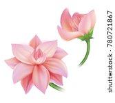 vector realistic lotos  cherry  ...   Shutterstock .eps vector #780721867