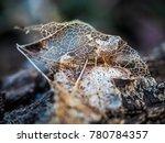 dead leaf skeleton macro | Shutterstock . vector #780784357