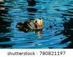 wild puffin at alaska. puffins... | Shutterstock . vector #780821197