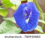 The Vivid Deep Blue Color Of...