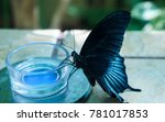 Black Butterfly With Blue...
