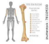 male upper arm bone anatomy.... | Shutterstock .eps vector #781109233