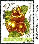 Small photo of Ukraine - circa 2017: A postage stamp printed in Bulgaria shows drawing Medlar, Mespilus germanica. Series: Fruits. Circa 1984