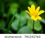 beautiful yellow flower closeup | Shutterstock . vector #781242763