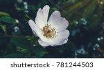 beautiful plant closeup shot | Shutterstock . vector #781244503