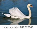 Closeup Mute Swan  Cygnus Olor...