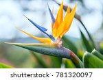 The Bird Of Paradise Flowers...