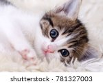 Stock photo the cute kitten baby cat 781327003
