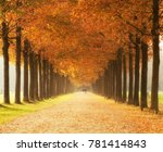autumn forest lane with on both ... | Shutterstock . vector #781414843