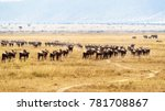 herd of wildebeest in open... | Shutterstock . vector #781708867