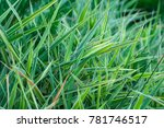 background with green striped... | Shutterstock . vector #781746517