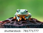 tree frog  flying frog  javan... | Shutterstock . vector #781771777