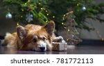 christmas. very beautiful corgi ... | Shutterstock . vector #781772113
