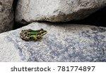 beautiful colorful frog closeup | Shutterstock . vector #781774897