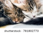 Two Adorable Kittens Sleeping...