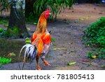l love fighting cock | Shutterstock . vector #781805413