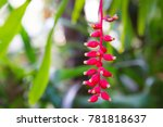 beautiful bonsai tree in the...   Shutterstock . vector #781818637