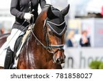 Small photo of Horse stallion in dressage with bridle and earmuff chewing from hand in the crotch
