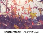 autumn yellow and red maple... | Shutterstock . vector #781945063