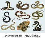 set viper snake. serpent cobra... | Shutterstock .eps vector #782062567