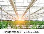industrial greenhouse with rows ... | Shutterstock . vector #782122333