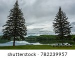 Green pine trees at lakeside under overcast sky