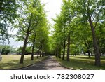 parallel road with tree  shiny  ... | Shutterstock . vector #782308027