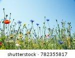wildflower meadow  newchurch... | Shutterstock . vector #782355817